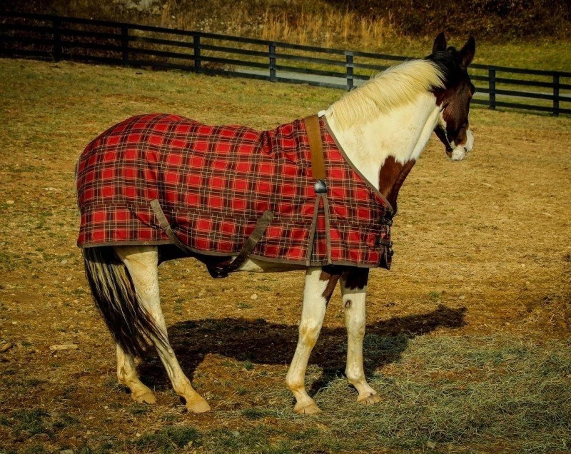 Dekování koní má svou specifickou problematiku