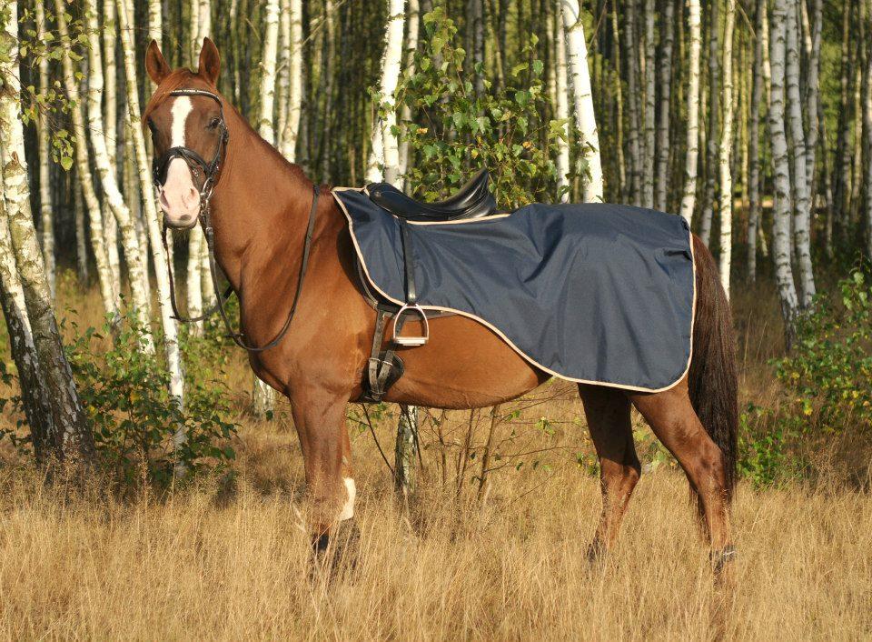 Bederní deka Horsea Basic
