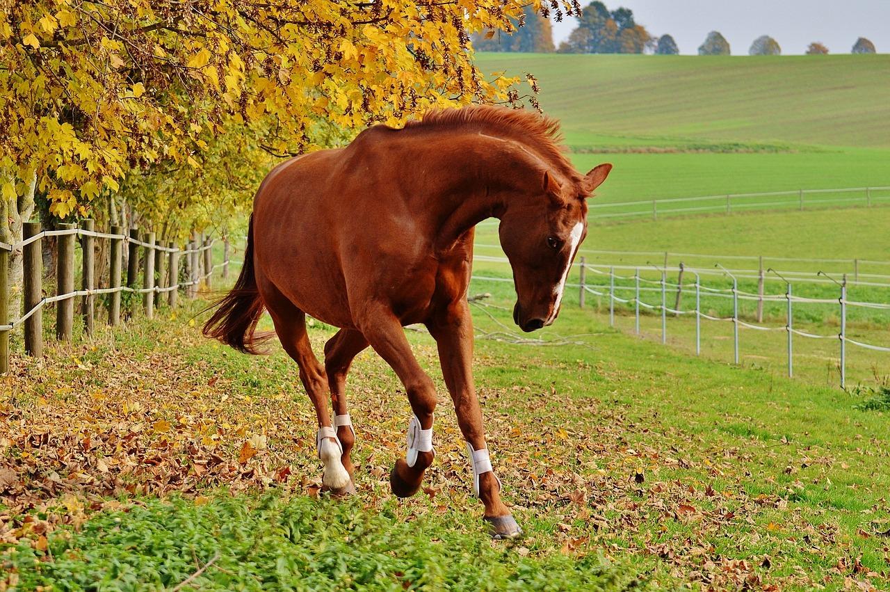 I během podzimu koně potřebují pohyb