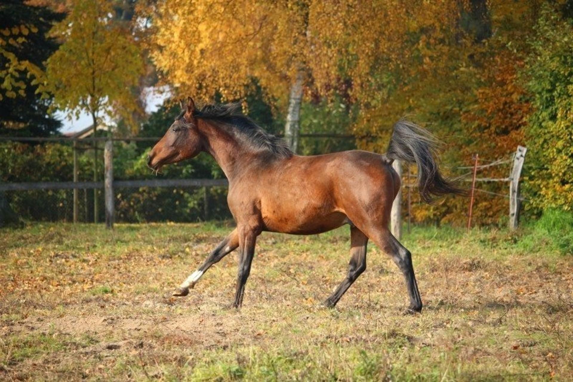 Pohyb je pro koně nezbytný