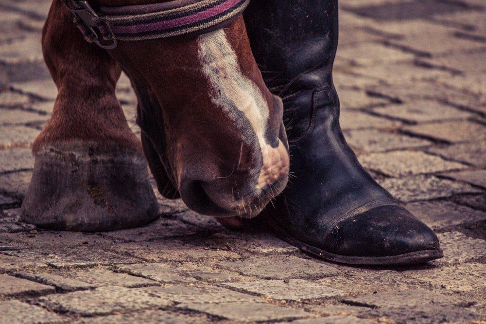 Boty pro koně jsou stejně užitečné jako boty pro lidi
