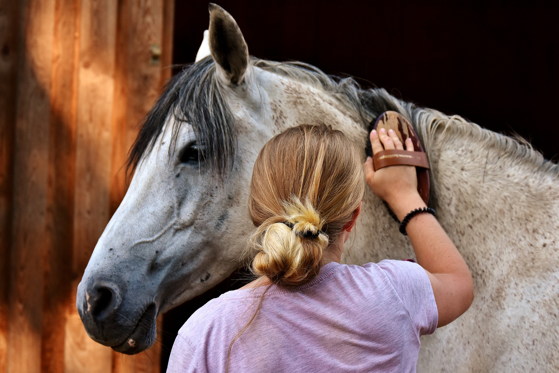 Péče o srst koně