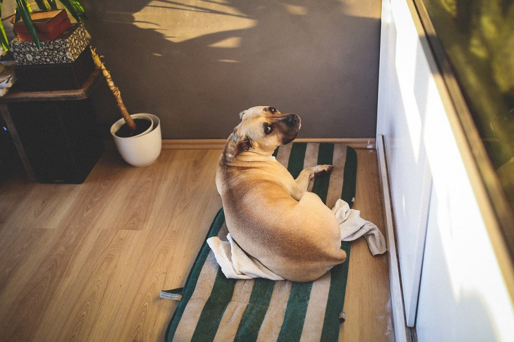 Pes spící na koberci bez pelíšku