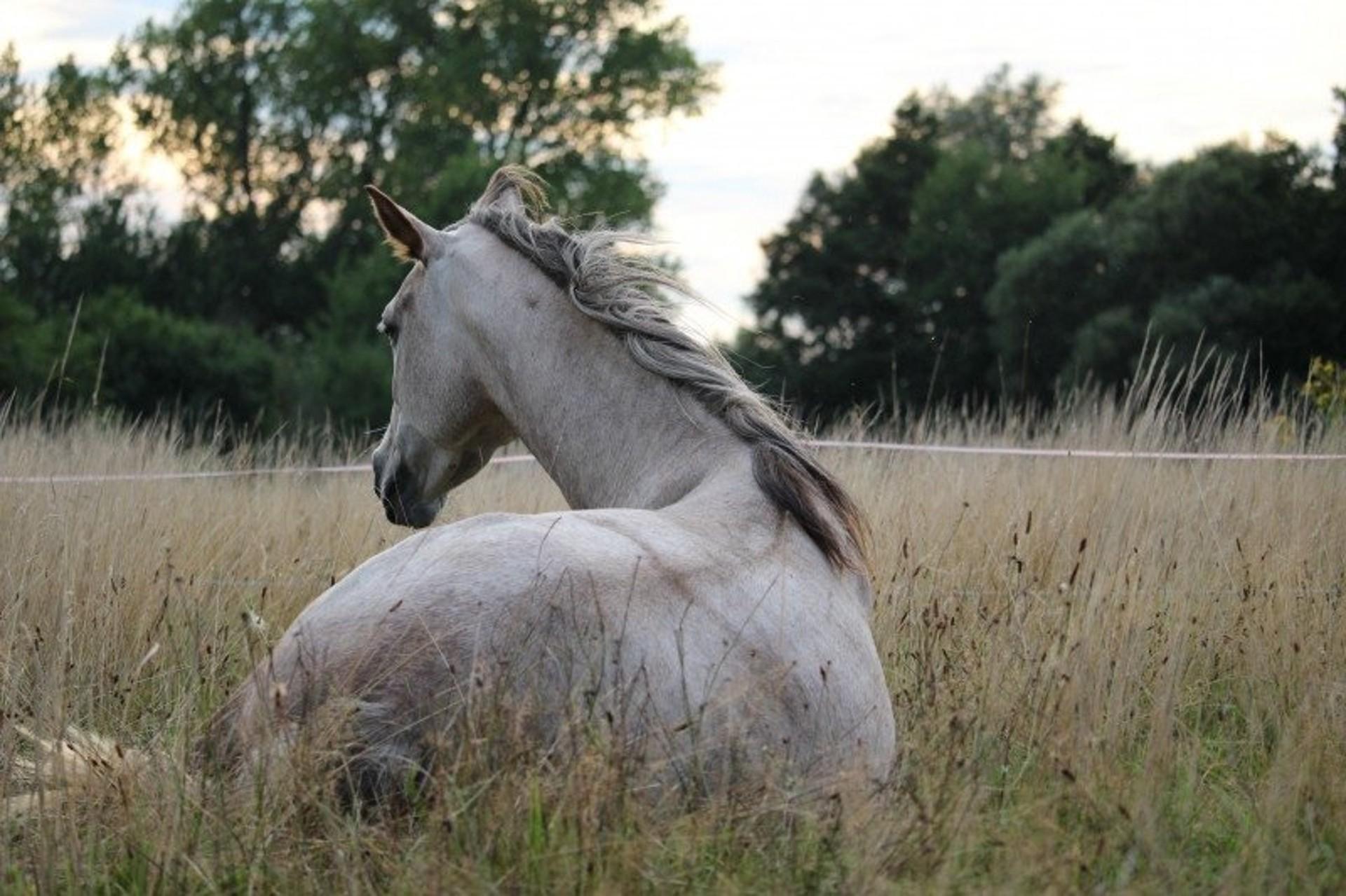 Důležité je posuzovat každého koně individuálně