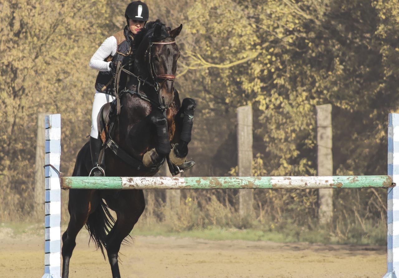 Potící se kůň v tréninku