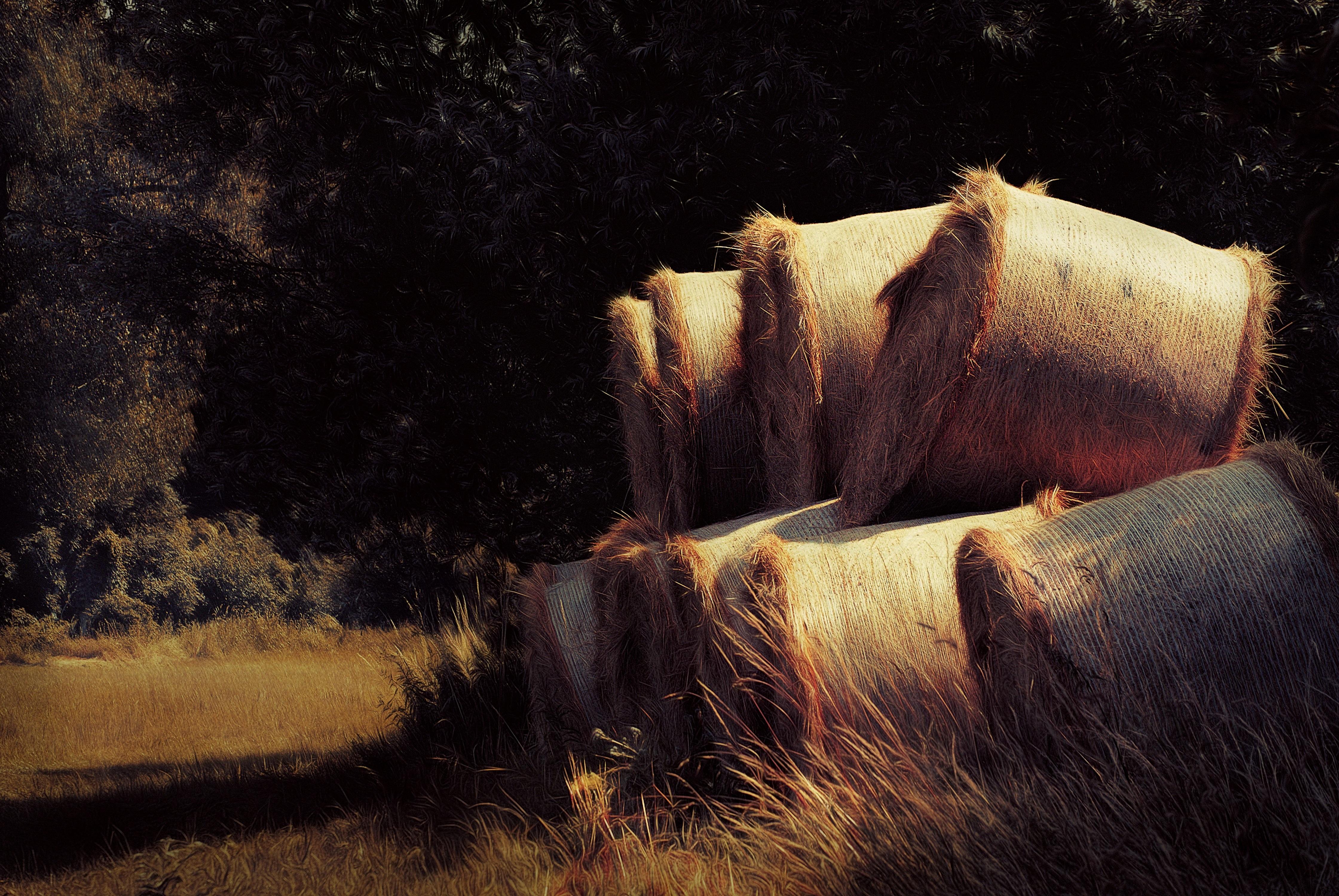 Kvalitní seno pro koně