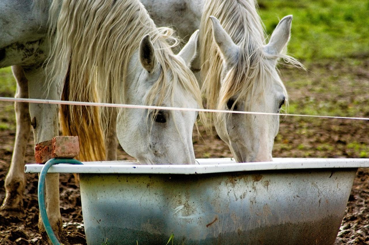 Zajistěte koni přístup k čisté vodě