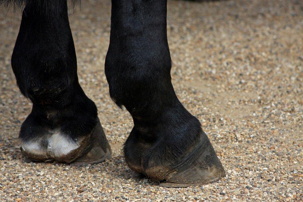 Stav kopyt zrcadlí výživný stav koně