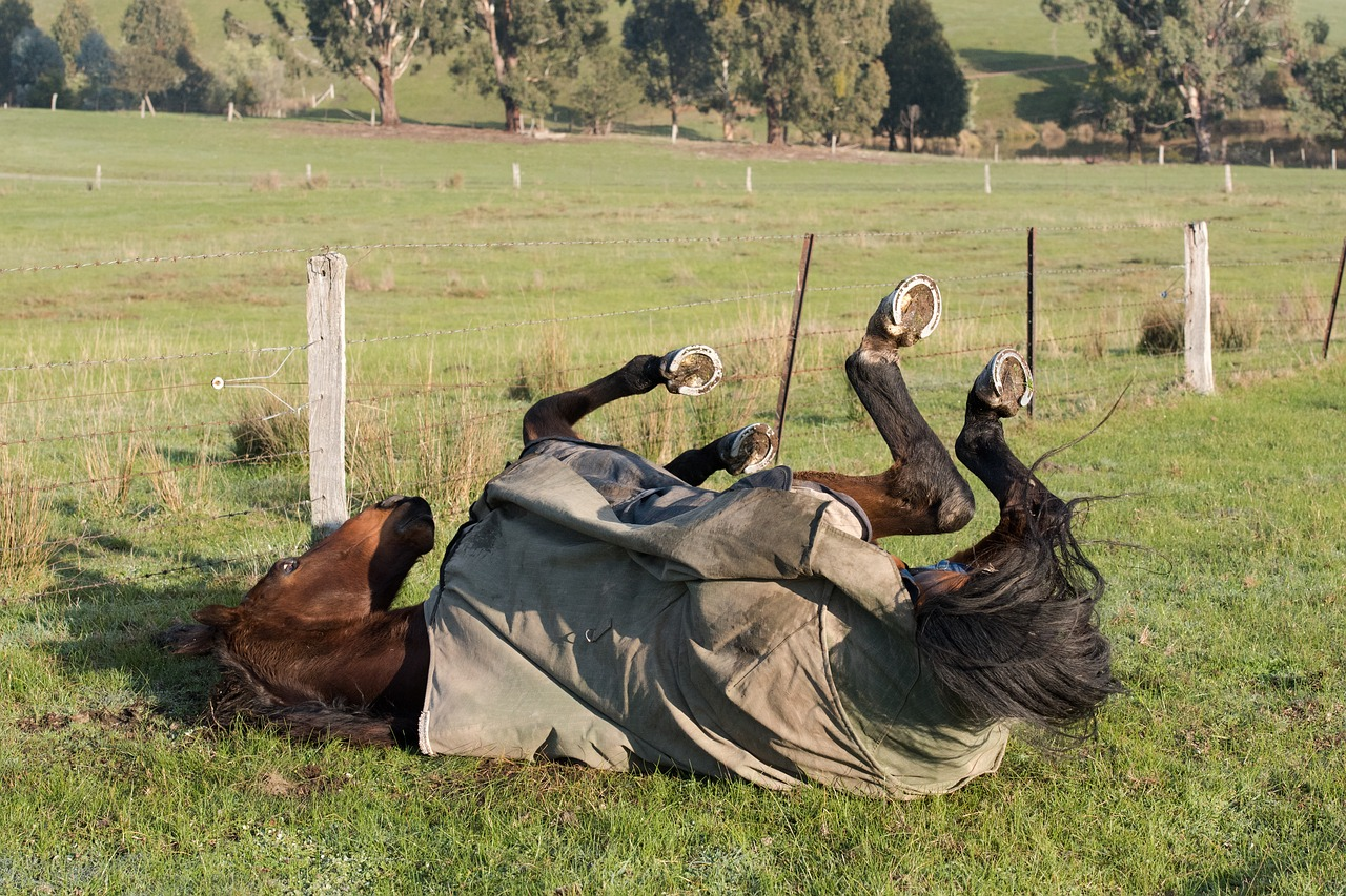 Výběhová deka pro koně