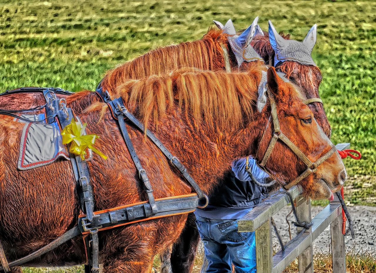 Zpocení koně po práci