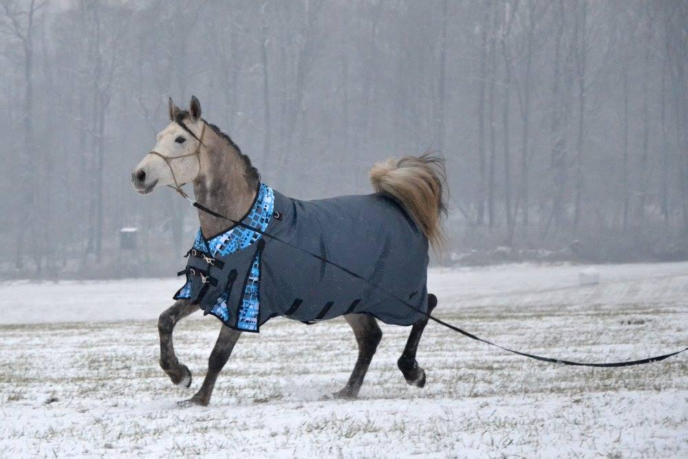 Výběhová deka pro koně Horsea Freestyle