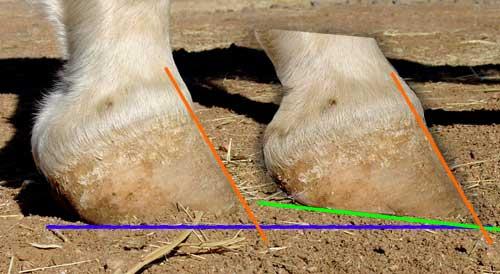 Porovnání výšky patek a jejich úhlů