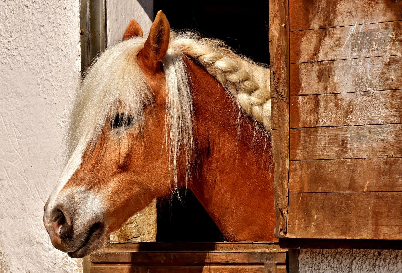 Kůň v boxe
